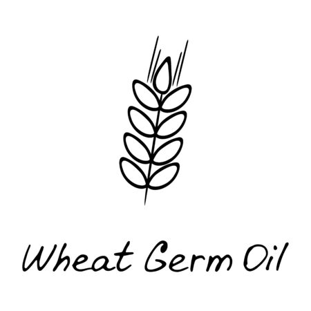 Cosmetic ingredient illustration. Wheat germs and spikelet, hand drawn illustration.