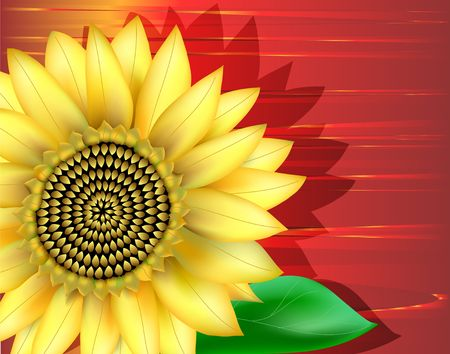 Close-up of sunflower. Digital illustration. Gradient Mesh. Filters. Imagens