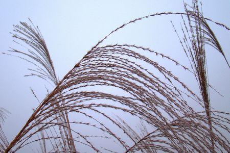 In wind reed