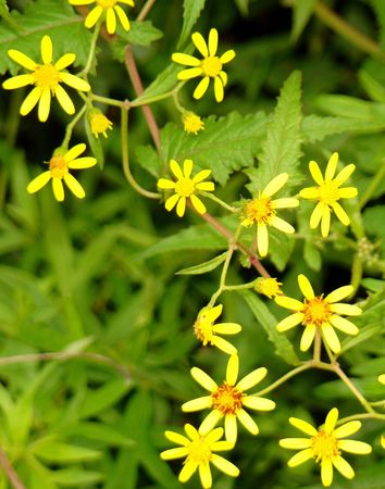 In wilderness not well-known floret