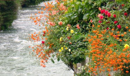 Brook shore flowers and plants
