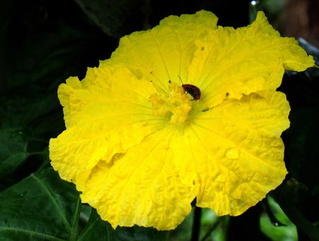 Crawls has insects pumpkin flower