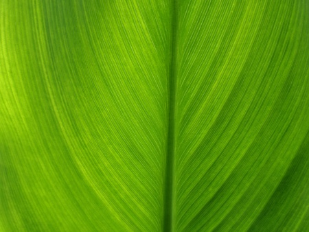 Texture clear green leaves