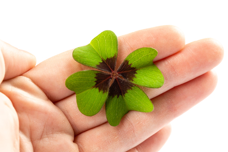 holding a green clover sign for luck isolated on a white background