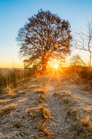 colorful winter sunrise on a field with tree in recker moor germany