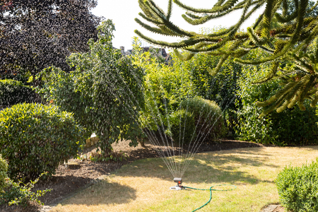 automatic watering grass with sprinkler
