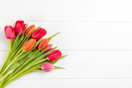 colorful tulips on a white background with copy space