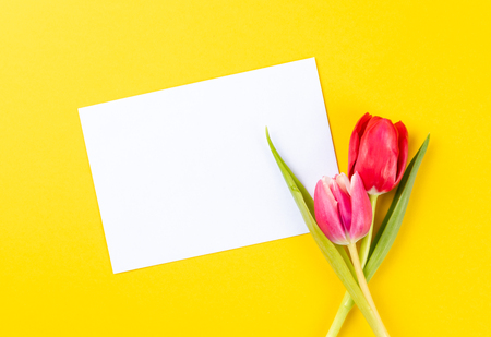 colorful tulips on a yellow background and copy space Reklamní fotografie