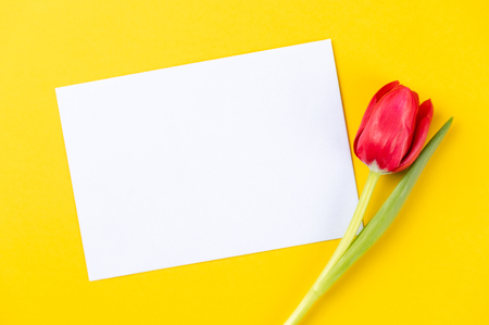 colorful tulips on a yellow background with white paper and copy space