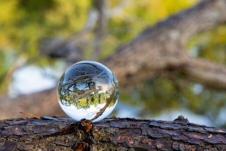 lensball on a log at the niedermarker lake in lengerich germany