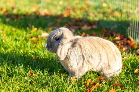 Young rabbits on the grass in nature in sunshine