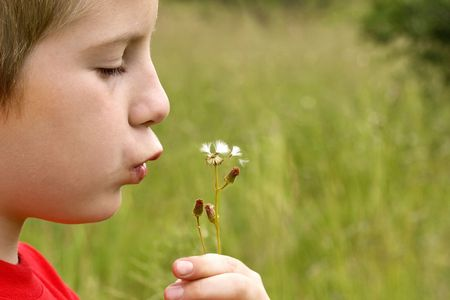 young boy blowing thistle held in his hand against natural green blurred background Stock Photo