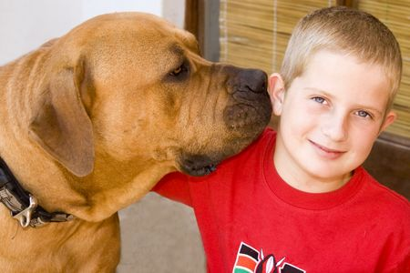 a large male boerboel dog and a young boy sharing a loving moment with a smile and a hug