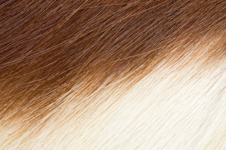 closeup of springbok hide for wallpaper or texture,showing dark and light striped pattern