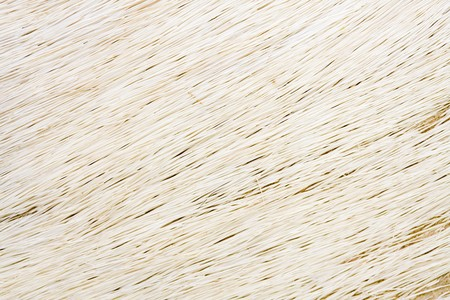 springbok: closeup of springbok hide for background or texture,