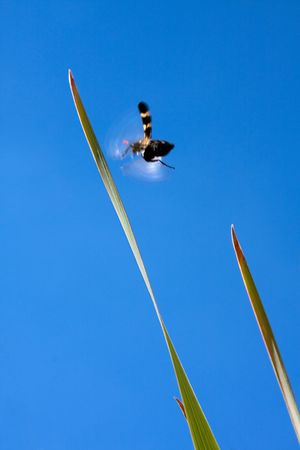 bug in blurred motion flight ,blue sky,blades of grass Stock Photo - 4751736