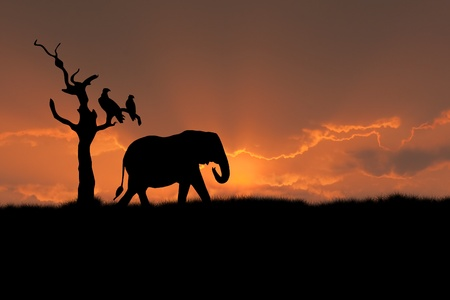 kruger park: african scene with silhouette elephant tree eagle sunset