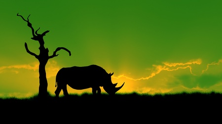 poaching: silhouette of african white rhinoceros against green night vision sky, tree