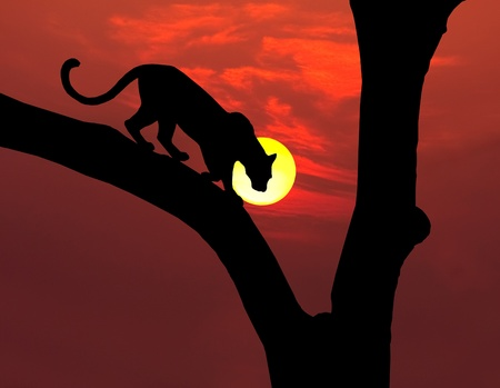african leopard in tree silhouette with round yellow setting sun and red sky Standard-Bild