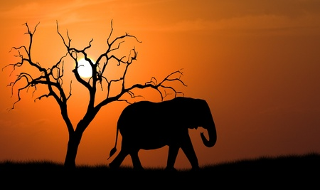 africa safari: silhouette of african elephant against orange dusk dawn sun with tree
