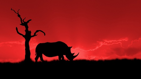 silhouette of african white rhinoceros against orange dusk dawn sky, tree photo