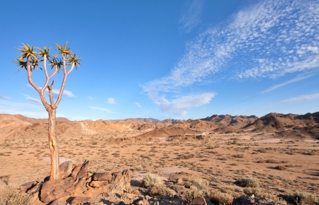 south park: dry desert landscape with quiver tree in Ai-Ais Richtersveld Transfrontier Park in South Africa