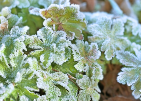 closeup frost on green leaves Stock Photo