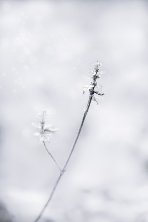 a twig with dead leaves  in winter, fine art closeup image Stock Photo
