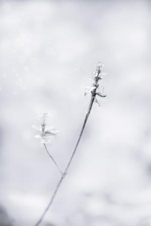a twig with dead leaves  in winter, fine art closeup image Standard-Bild