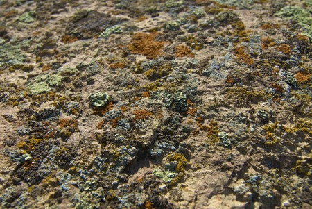 Texture of stone by the covered moss photo