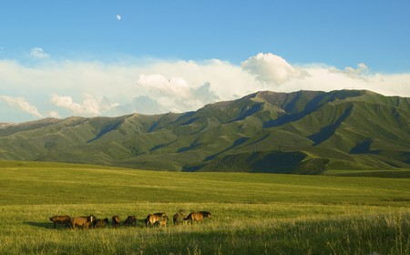 Of horses it is passed in the Alpine meadow