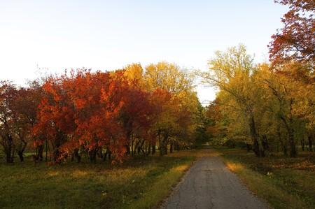 Autunnali alberi sul tramonto nel parco dendra