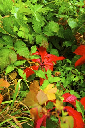 Autumnal leaves by the closeup photo