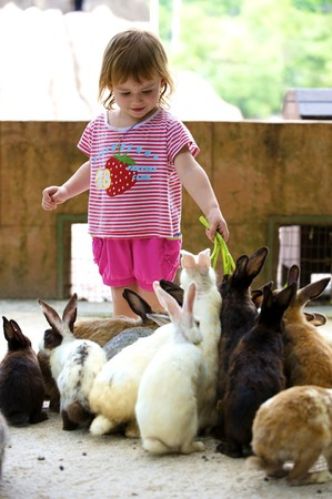 The little girl feeds rabbits with a grass
