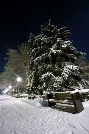 snowlandscape: Bench and tree covered with snow. Night shot Stock Photo