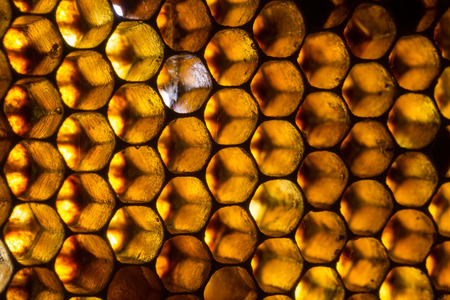 Close up studio shot of organic honey in a honey-comb. Stock Photo
