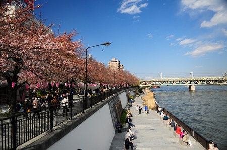 sumida: Sumida park at Tokyo