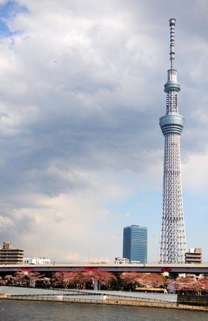 Tokyo sky tree with sakura blossom Stock Photo - 13428235