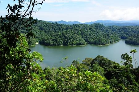 brushwood: Lake reservoir in tropical forest