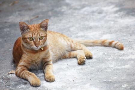 gato naranja: Naranja gato