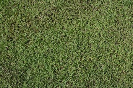 Fresh green grass top view Stock Photo - 7916790