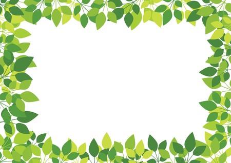 germination: Hojas de verde sobre fondo blanco