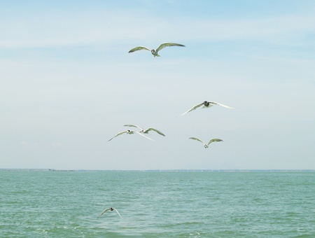 Seagulls flock flying on blue sky photo