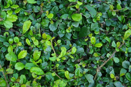 Fresh green leaves for background Stock Photo - 8622566