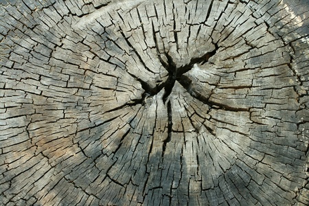 Old dried wood texture for background Stock Photo - 9490449