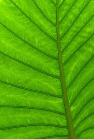 Close up green leaf texture photo