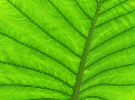 緑の葉の質感アップ閉じる 写真素材