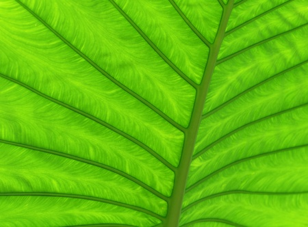 Close up green leaf texture Stock Photo