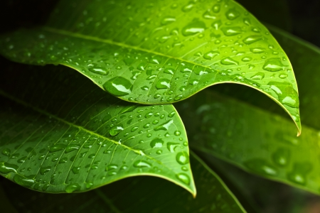 Green leaf with water drops for background photo