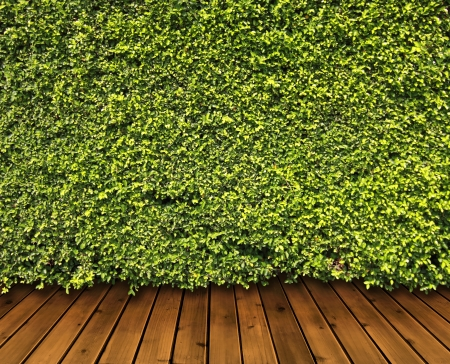 Green leaves wall and wood floor for background photo